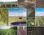 Vineyards And Wineries