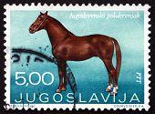 Postage Stamp Yugoslavia 1969 Yugoslav Halfbreed, Horse