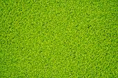 foto of green algae  - green algae occur in naturally lake of city - JPG