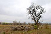 Dead Tree In Open Space