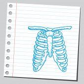 Ribcage sketch