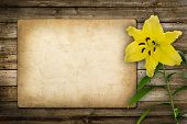stock photo of day-lilies  - Card for invitation or congratulation with yellow lily flower in vintage style - JPG