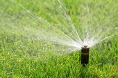 picture of sprinkler  - automatic irrigation system with sprinkler watering fresh lawn - JPG