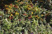Bush flowers in the Garden in Paris