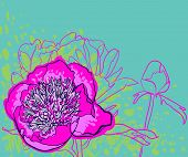 Vector decorative image peony flowers