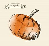 hand drawn vintage illustration of pumpkin