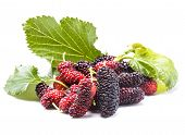 stock photo of mulberry  - Mulberry berries close up on white background - JPG