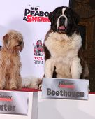 LOS ANGELES - FEB 14:  Baxter, Beethoven at the Mr. Peabody honored with Pawprints in Cement at TCL