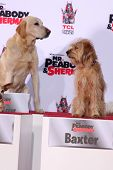 LOS ANGELES - FEB 14:  Marley, Baxter at the Mr. Peabody honored with Pawprints in Cement at TCL Chi