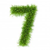 pic of number 7  - Grass  - JPG