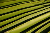 Textures Of Green Palm Leaves