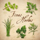 Fines Herbes, French Herb Blend