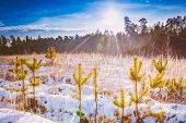 First Snow Covered The Dry Yellow Grass In Forest