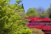 Azalea surrounded by forest