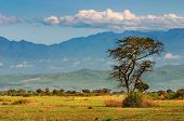 afrikanischen Savanne