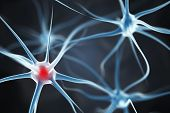 stock photo of neuron  - Neurons in the brain - JPG