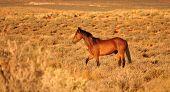 Navajo Horse