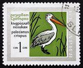 Postage Stamp Bulgaria 1968 Dalmatian Pelican, Bird