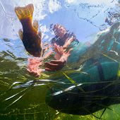 Underwater shot of the fisherman catching the fish