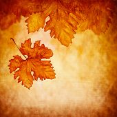 Grungy abstract autumnal background, old dry maple leaf falling down, beautiful orange foliage, autu