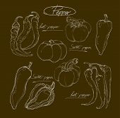 Vector Hand Drawing Set  Peppers
