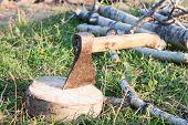 Tourist Ax Stuck In Stump