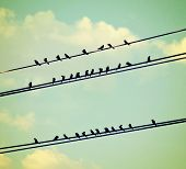 stock photo of blue animal  - birds on wires over blue sky with clouds background toned with a vintage retro instagram filter - JPG