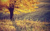 Golden Autumn Color Tree