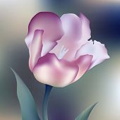 flower  tulips flower, spring, petal, tulip, isolated, background, blossom, bouquet, plant, floral,