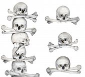 Human skulls and bones. Isolated on white background