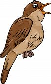 picture of nightingale  - Cartoon Illustration of Funny Nightingale Bird Animal - JPG