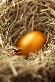 stock photo of nest-egg  - One golden chicken egg in nest close - JPG