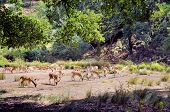 stock photo of deer family  - Herd of deer feeding in the woods