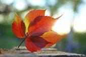 Beautiful autumn leaf on stump