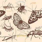 Vector Seamless Pattern With Detailed Insects In Vintage Style