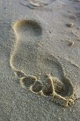 Footprint on river sand