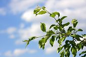 Branch of apple-tree on a background sky.