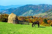 picture of household farm  - Horse in a pasture in the mountains in autumn Carpathian - JPG