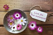Silver Bowl With Cosmea Blossoms With Life Quote Live For The Moment