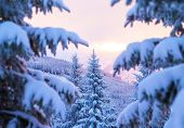Beautiful winter forest, majestic view on mountainous landscape through fir tree branch covered with white snow, wintertime greeting card