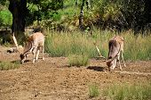 pic of deer family  - Young deer searching for food in the forest - JPG