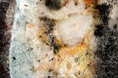 stock photo of spores  - Mold - JPG