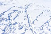 Ski Traces On Snow In Winter Mountains Close-up