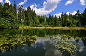 stock photo of water lily  - Calm lake with water lilies and forest reflected in the water - JPG