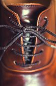 picture of loafers  - A vertical close up of laces on a brown leather business shoe - JPG