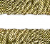 picture of lizard skin  - textured of iguana skin frame on white background - JPG