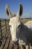 stock photo of jackass  - Donkey enjoying conversation attention and ompany of humans - JPG