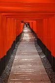 pic of inari  - Kyoto Japan  - JPG