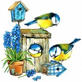 foto of grass bird  - Garden Spring Flowers and Bird - JPG