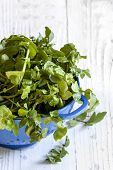 picture of timber  - Watercress in blue colander over white timber background - JPG